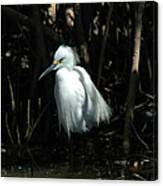 Egret Of Sanibel 2 Canvas Print