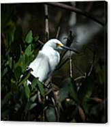 Egret Of Sanibel 5 Canvas Print