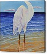 Eager Egret  Canvas Print