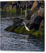 Egret On The Rocks Canvas Print