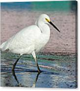 Egret Reflections- 2  Canvas Print
