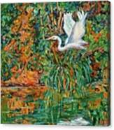 Egret Reflections Canvas Print