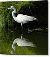 Egret Reflections Canvas Print