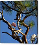 Egret Spoonbill And Stork Canvas Print