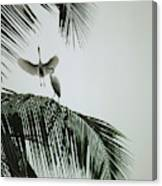 Egrets In A Palm Tree, Bali, Indonesia Canvas Print