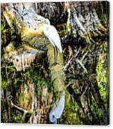 Egrets Reflection Canvas Print