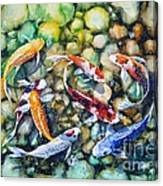 Eight Koi Fish Playing With Bubbles Canvas Print
