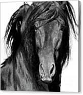 El Caballo Negro Canvas Print