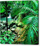 El Yunque Palm Trees And Waterfall Canvas Print