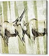 Eland-modern Canvas Print