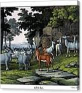 Eland Pallah Koodoo Canvas Print