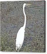 Elegant Egret  Canvas Print
