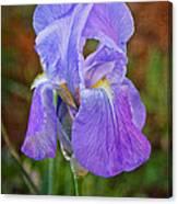 Elegant Iris Canvas Print