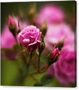 Elegant Pink Canvas Print