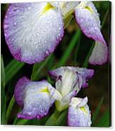 Elegant Purple Iris Canvas Print