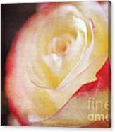 Elegant Rose Canvas Print