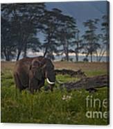 Elephant   #0134 Canvas Print
