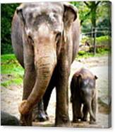 Elephant Baby Olli With Mommy Canvas Print
