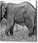 Elephant Bull In Black And White Canvas Print