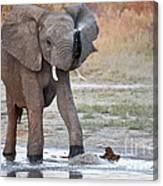 Elephant Calf Spraying Water Canvas Print