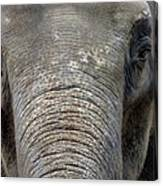 Elephant Close Up 1 Canvas Print