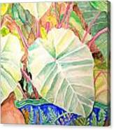 Elephant Ears Canvas Print