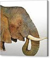Elephant Head Study Canvas Print