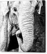 Elephant IIi Canvas Print