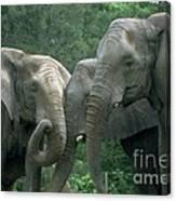 Elephant Ladies Canvas Print