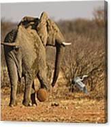 Elephant On The Run Canvas Print