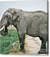 Elephant Roadblock Canvas Print