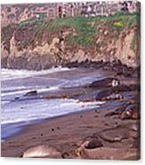 Elephant Seals On The Beach, San Luis Canvas Print