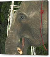 Elephant Under His Thumb Canvas Print