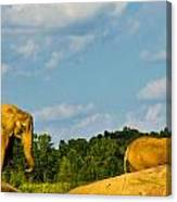 Elephants Among The Rocks. Canvas Print