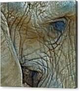 Elephant's Face Canvas Print