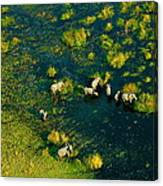 Elephants From Above Canvas Print