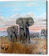 Elephants Warning To The Lions Canvas Print