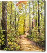 Elfin Forest Canvas Print