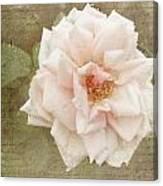 Elie Beauvillain Rose Textured Art Canvas Print