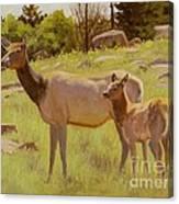 Elk And Calf Canvas Print