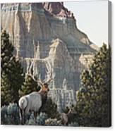 Elk At Cathedral Rock Canvas Print