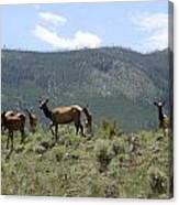 Elk Family Canvas Print