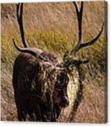 Elk Hairdo Canvas Print