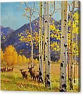 Elk Herd In Aspen Grove Canvas Print