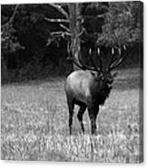 Elk In Black And White Canvas Print