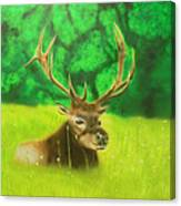 Elk In The Distance Canvas Print