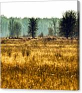 Elk In The Distance No. 1 Canvas Print