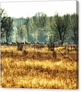 Elk In The Distance No. 2 Canvas Print
