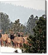 Elk In The Snowing Open Canvas Print