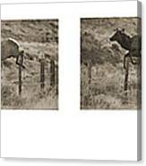 Elk Jumping A Fence Canvas Print